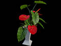 Anthurium Pot Plant - Artificial