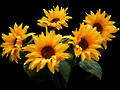 Sunflower Bunch - Artificial