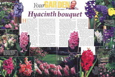 hyacinth bouquet-230x153